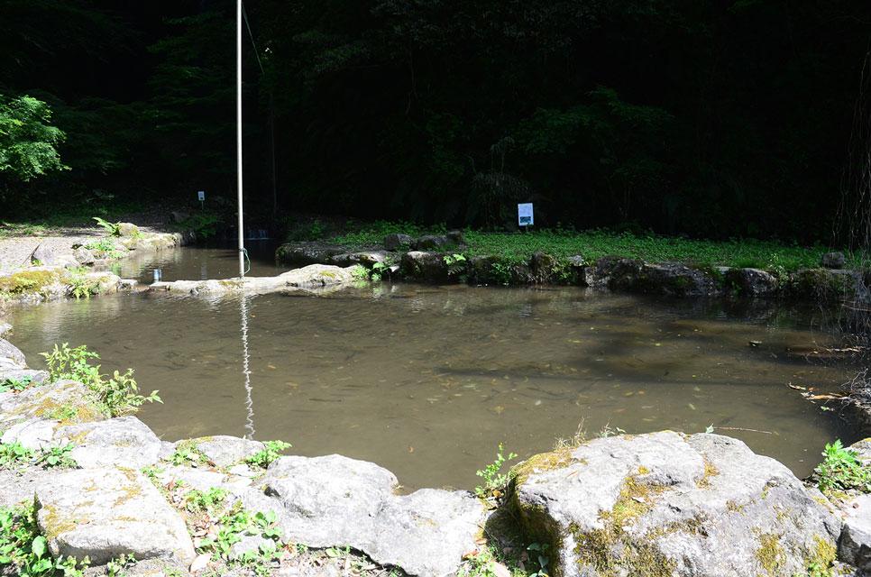 カゴプラ温泉渓谷苑13釣り堀