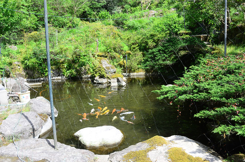 カゴプラ温泉渓谷苑14池とコイ