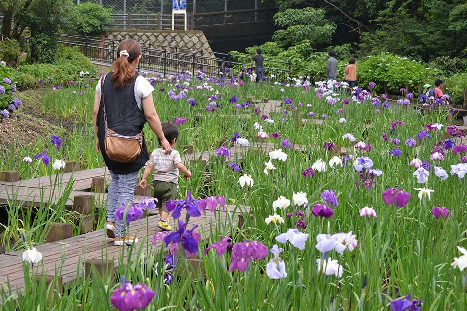 平川動物公園 花しょうぶまつり